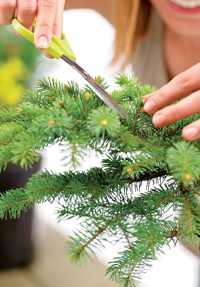 Cắt tỉa cây thường xuyên để phát huy nguồn năng lượng tích cực