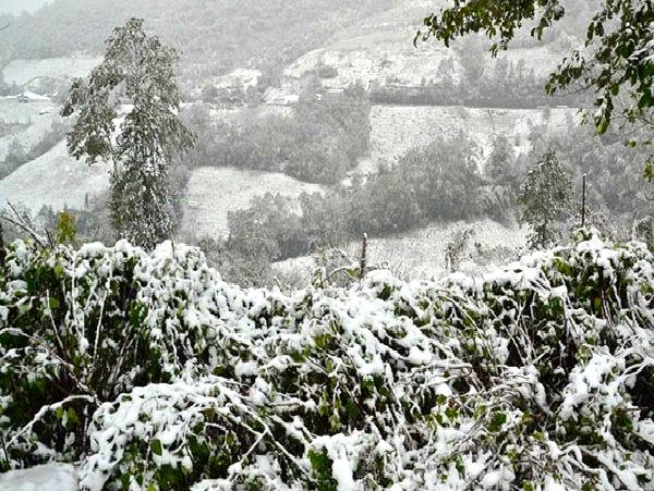 Tuyết phủ trắng