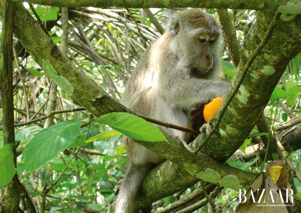 Ngắm nhìn những đàn khỉ tinh nghịch