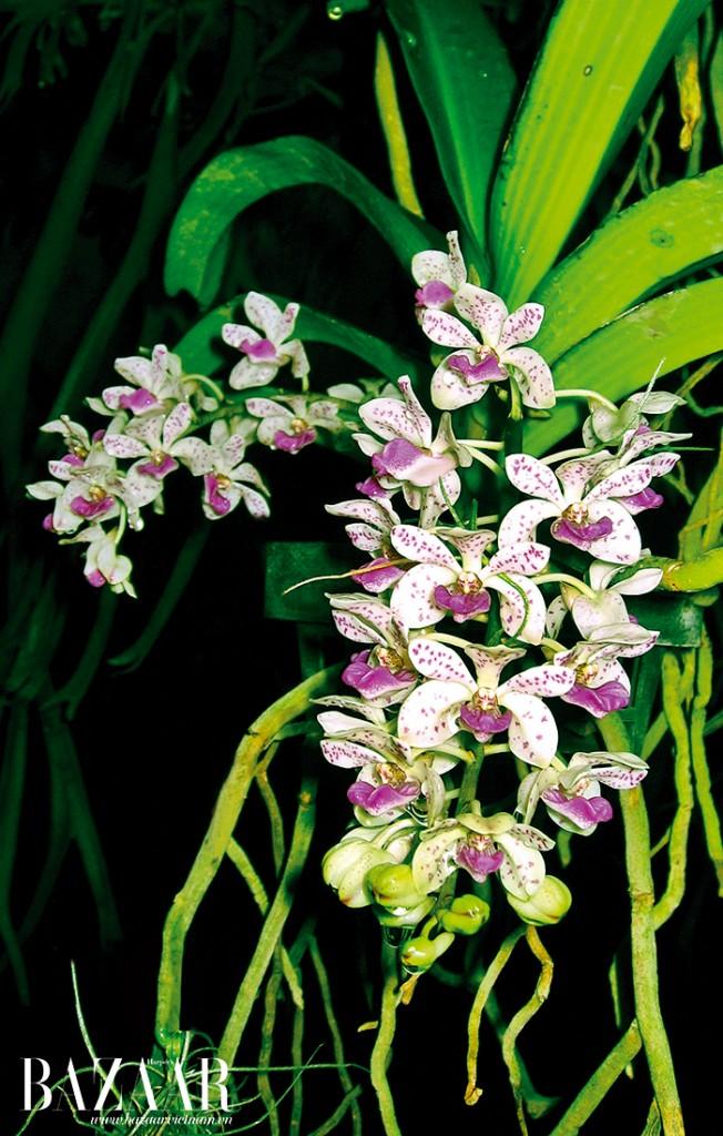 Hoa lan rừng khoe sắc khắp nơi