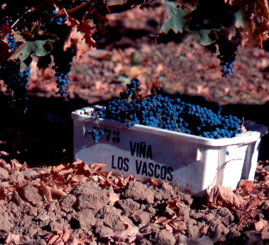 los-vascos-harvest-panier