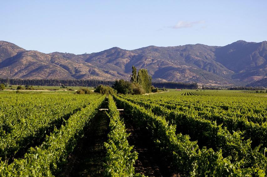 los-vascos-vineyard