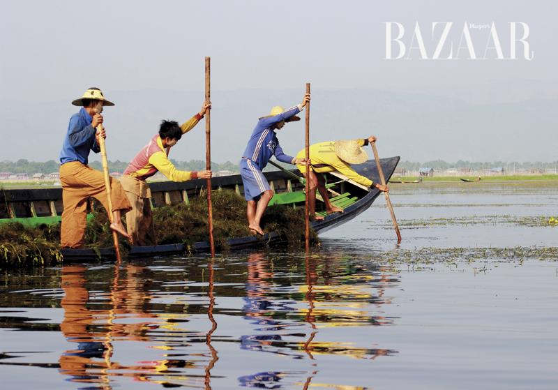 Dưới mặt nước là tầng tầng rong đung đưa theo sóng. Người dân khai thác rong này để đan lớp nền tạo thành những vườn cây nổi trên hồ