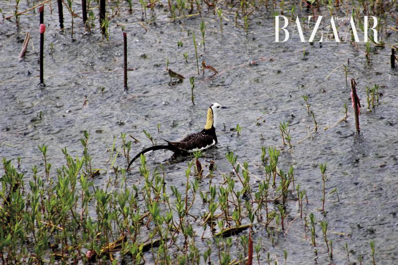 Hồ Inle Lake Myanmar 03