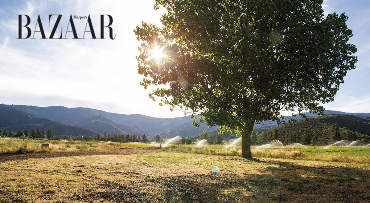 Chiều nắng nơi California thiếu nước vì khô hạn. Những vòi phun nước phải hoạt động hết công suất để tưới mát đồng cỏ cho bò và heo