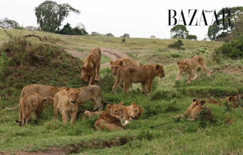 masai-mara-7