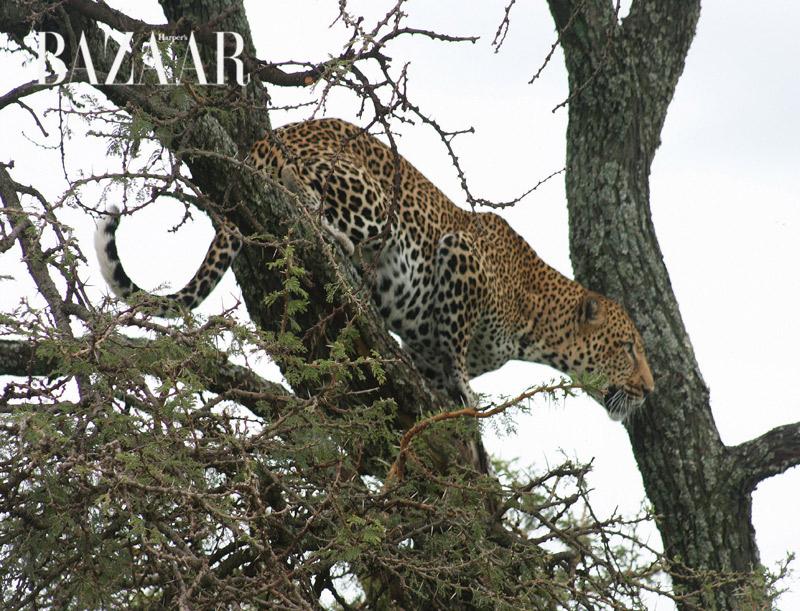 masai-mara-9