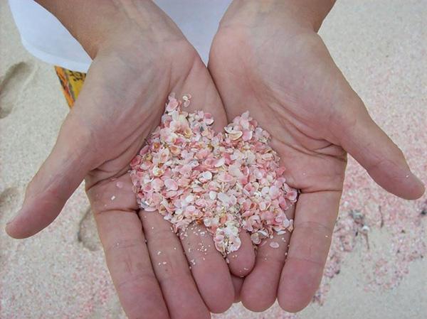 bãi cát hồng 1