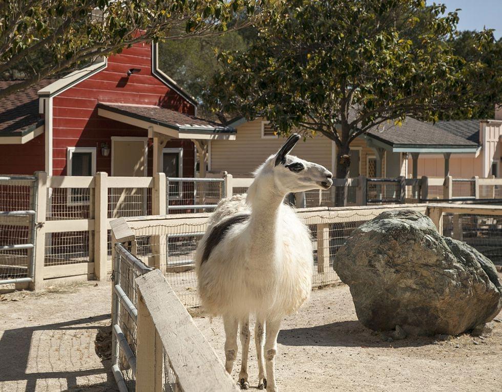 Trang trại Neverland: Michael Jackson từng có cả một sở thú mini, nhưng khu vực này đã bị dỡ bỏ