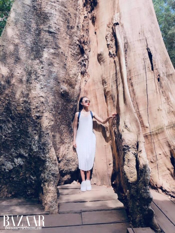 Bên những thân cây cổ thụ của Angkor Wat