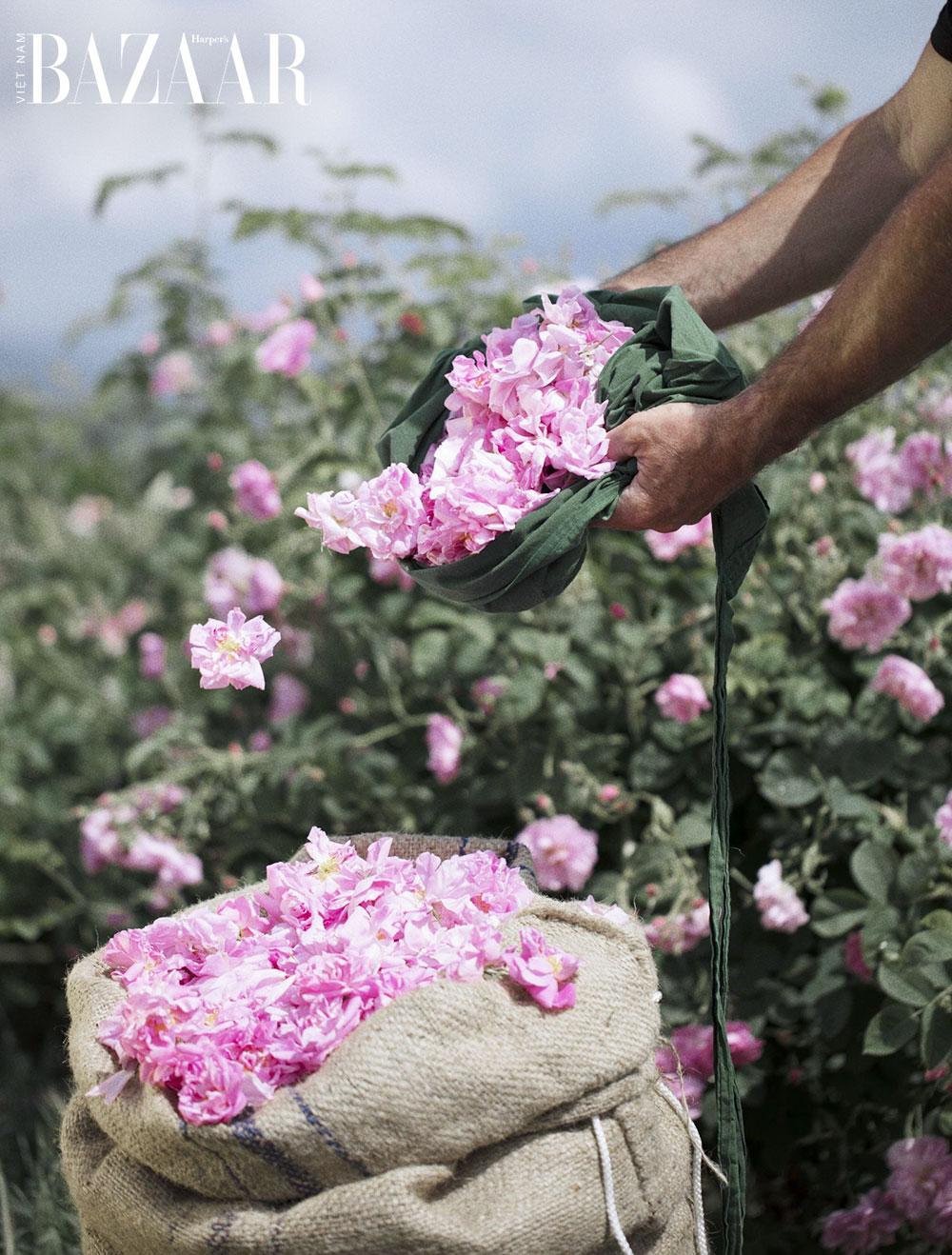 Khoa học chứng minh: Cắm hoa tươi giúp bạn giảm đau 1