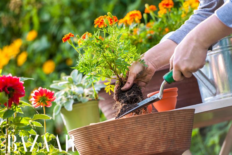 Làm vườn là liệu pháp thiền định