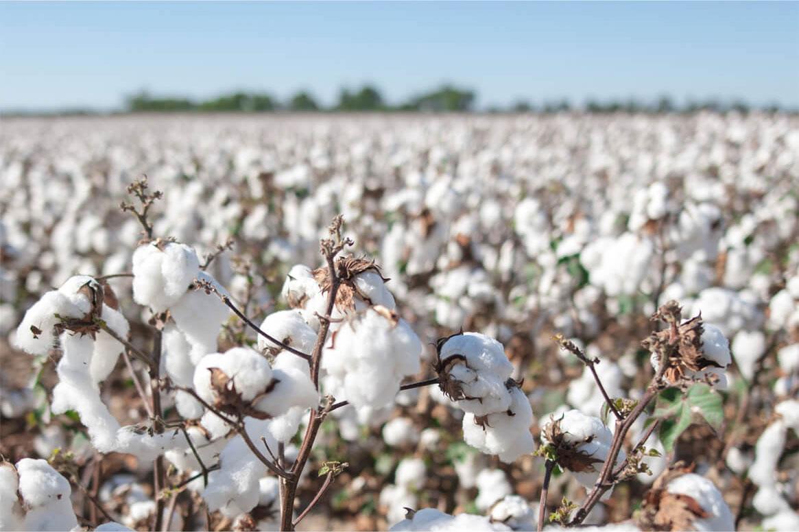 chiếc áo Chemise à la Reine biến cotton thành chất liệu được ưa chuộng nhất mọi thời đại
