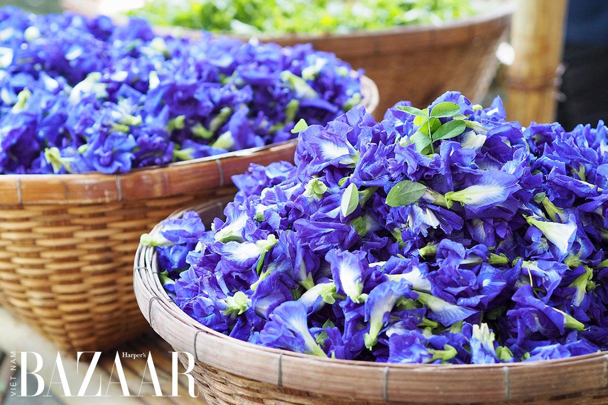 Những bông hoa đậu biếc vừa thu hoạch
