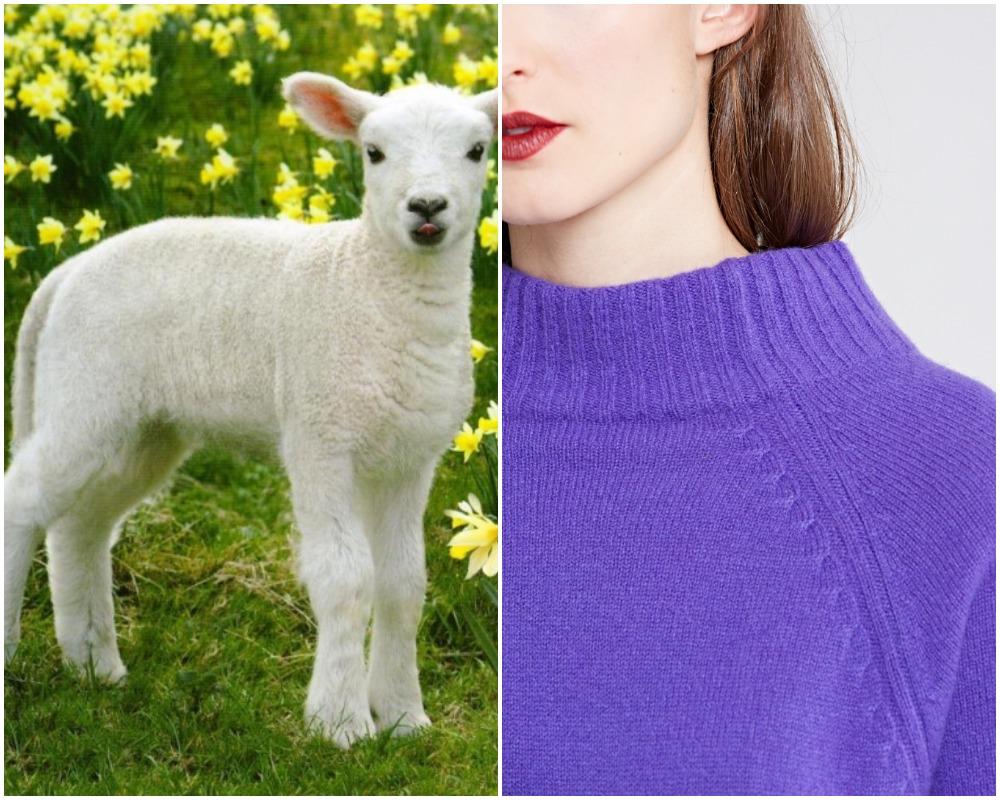 Cách chọn đồ len cao cấp: Hiểu về len cừu non (lambswool)
