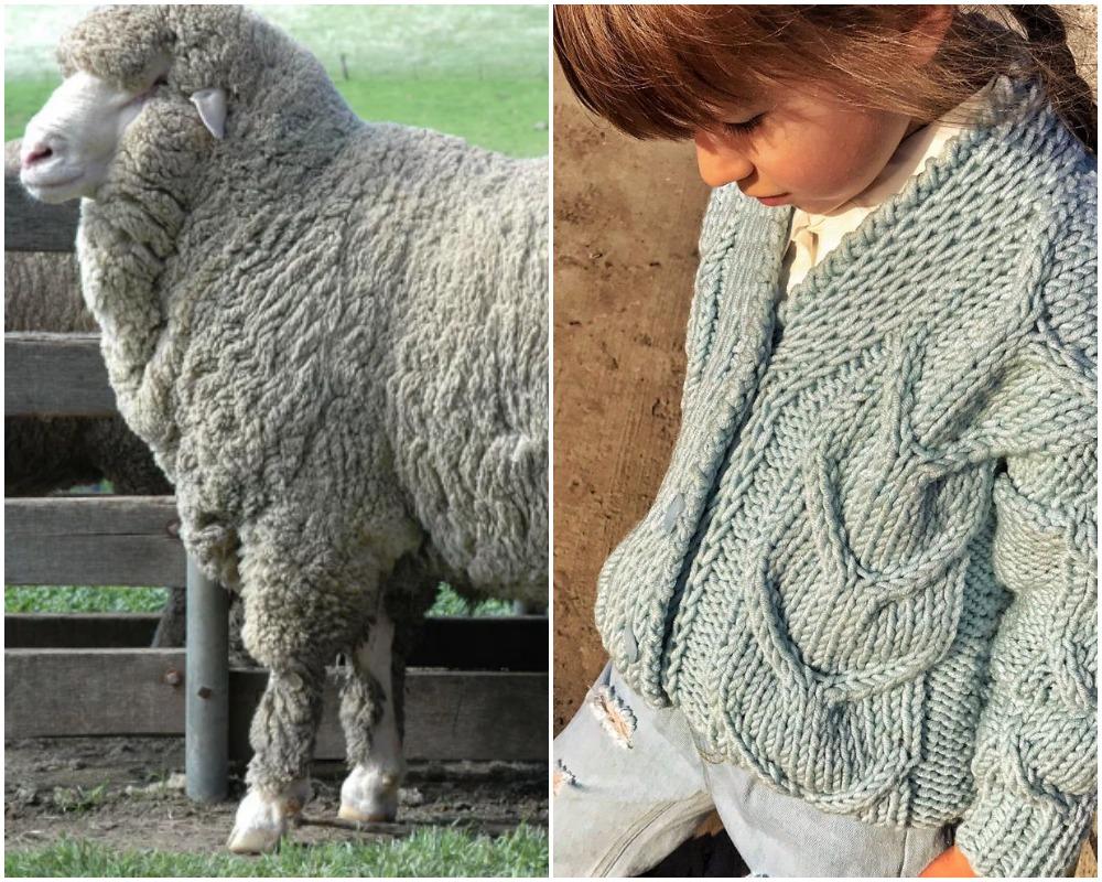 Cách chọn đồ len cao cấp: Hiểu về len merino