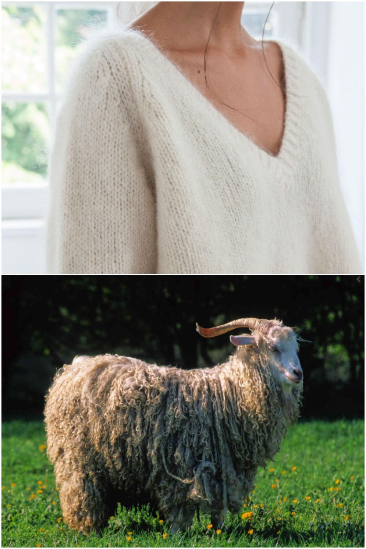Cách chọn đồ len cao cấp: Hiểu về len mohair từ dê angora