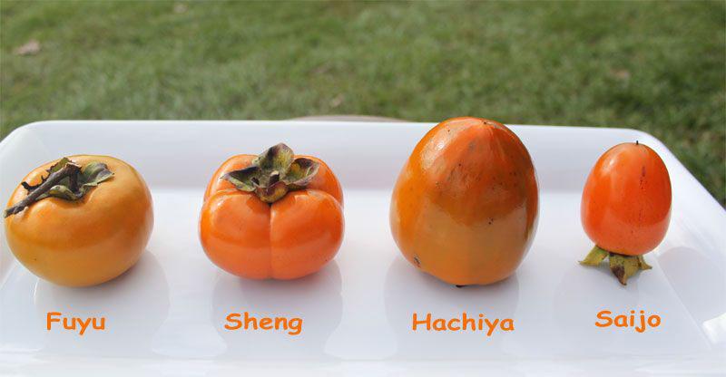 Quả hồng: Thứ trái cây ngon ngọt có thể gây hại bao tử 2