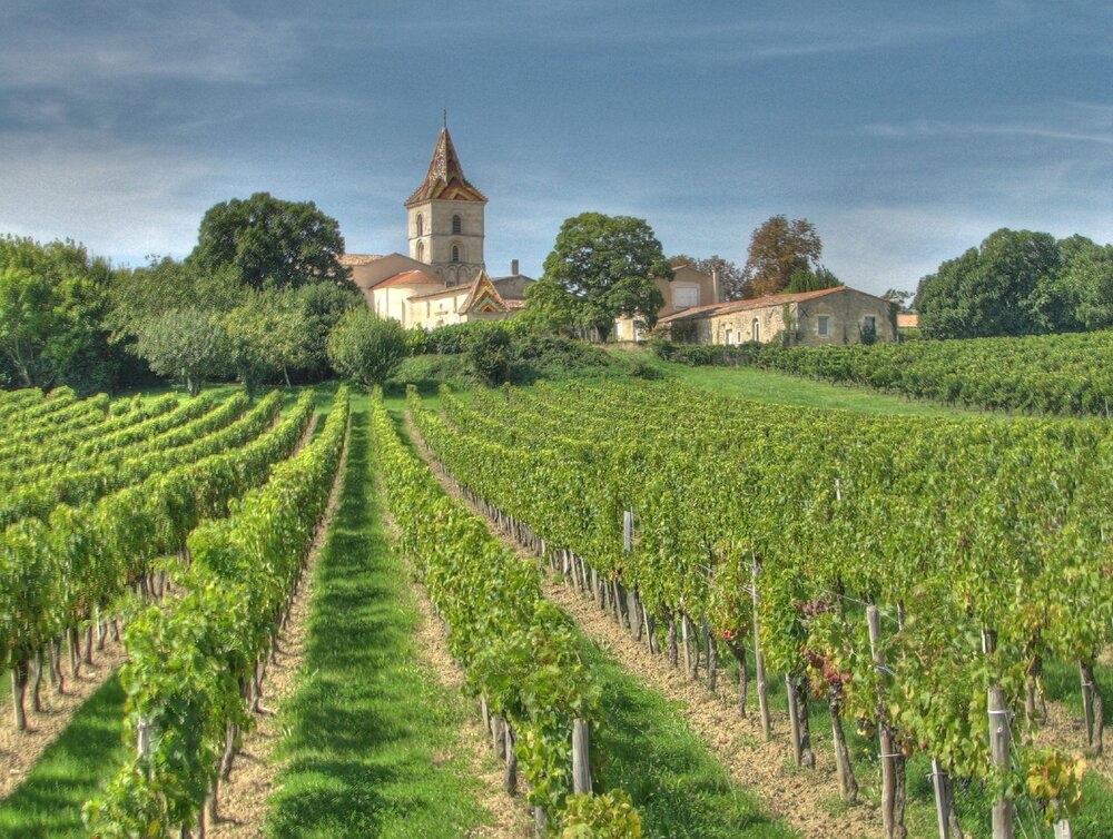 Vùng Bordeaux, Tây Nam nước Pháp là nơi khai sinh nho Cabernet Sauvignon. Ảnh: Wikipedia