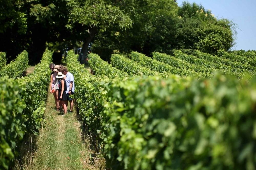 Saint Émilion, một xã trồng nho Merlot ở tỉnh Gironde, vùng Tây Nam nước Pháp. Ảnh: Myguide-cdn.com.