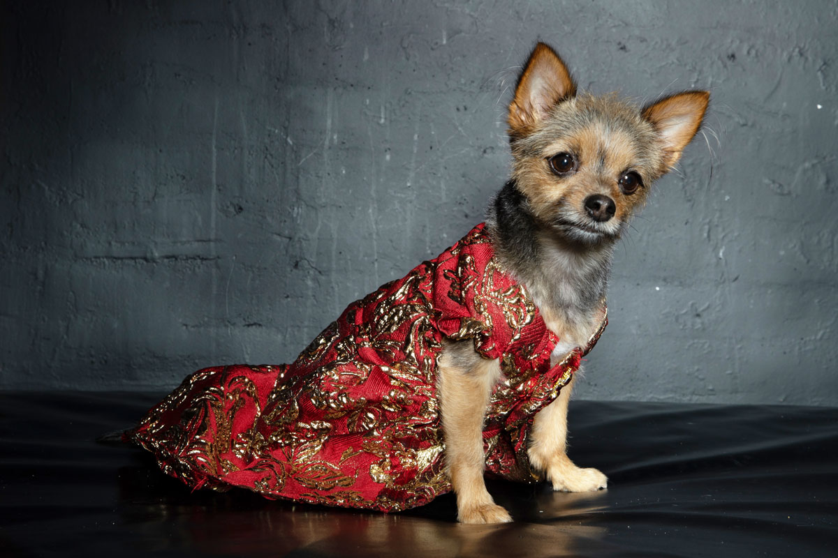 BST thời trang thú cưng – Anthony Rubio Thu Đông 2021 tại Tuần lễ thời trang New York