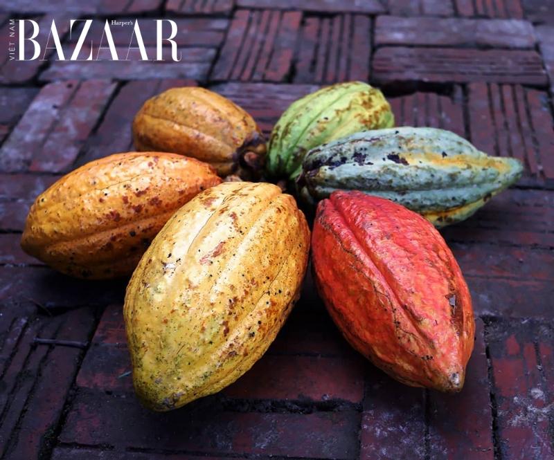 BZ-chocolate-hormone-hanh-phuc-cacao-beans-maison-marou