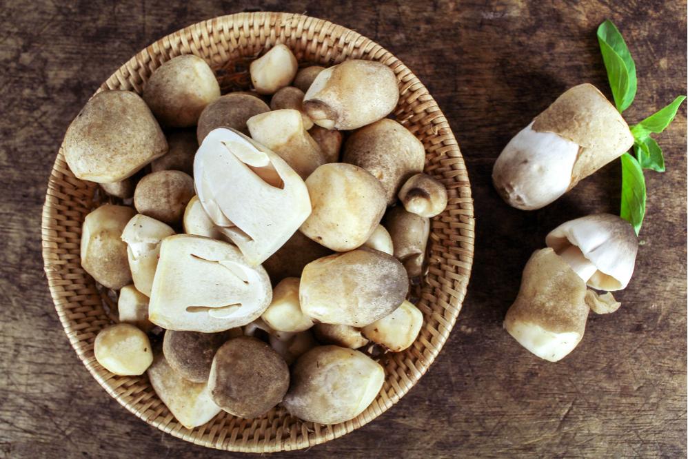 Nấm rơm (straw mushroom)