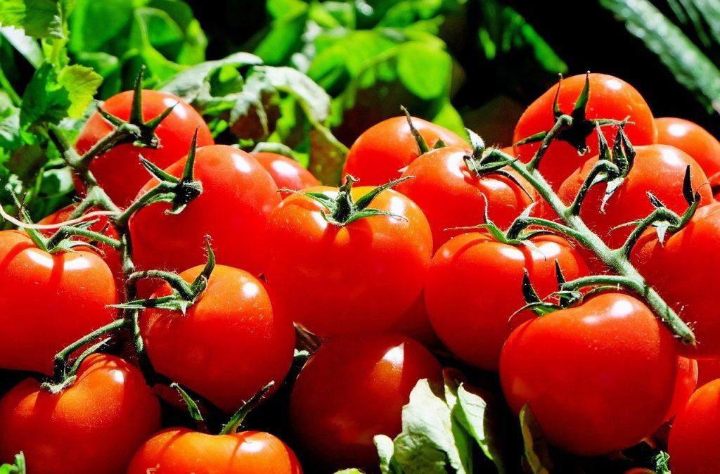 cà chua đốt cháy chất béo