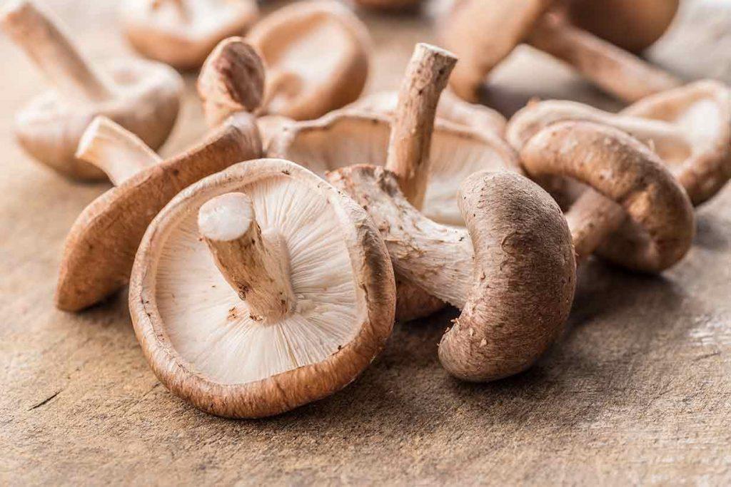 công dụng của nấm hương (shiitake mushroom)
