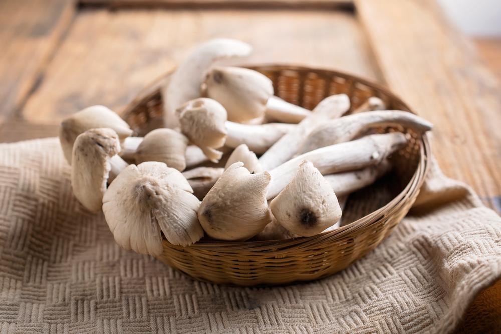 Nấm mối (termite mushroom)