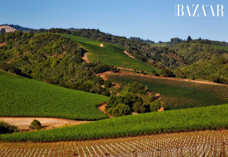 3 nhà sản xuất rượu vang Tân Thế Giới danh tiếng nhất: Caymus