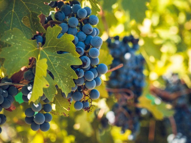 3 nhà sản xuất rượu vang Tân Thế Giới danh tiếng nhất: Catena Zapata