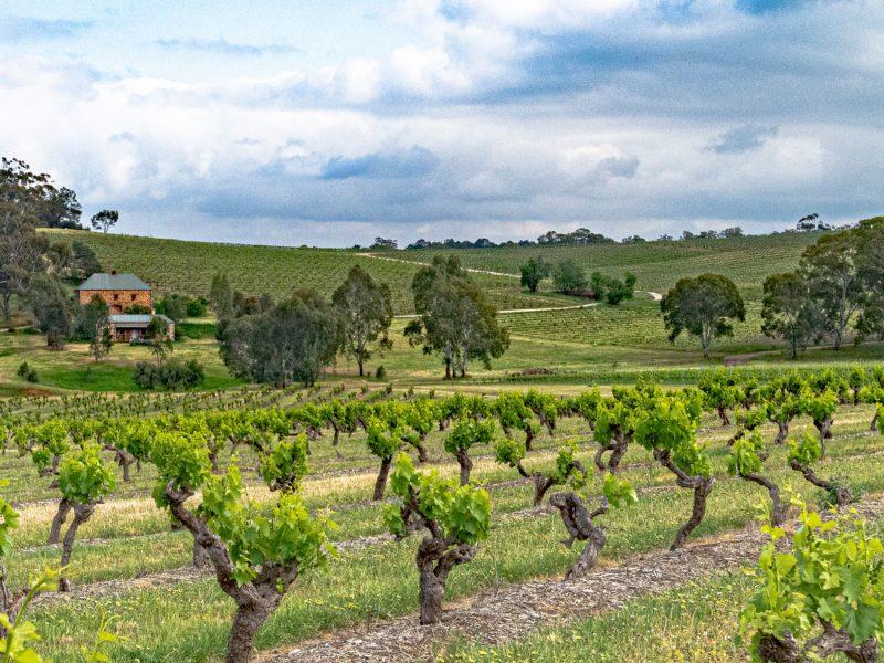3 nhà sản xuất rượu vang Tân Thế Giới danh tiếng nhất: Torbreck