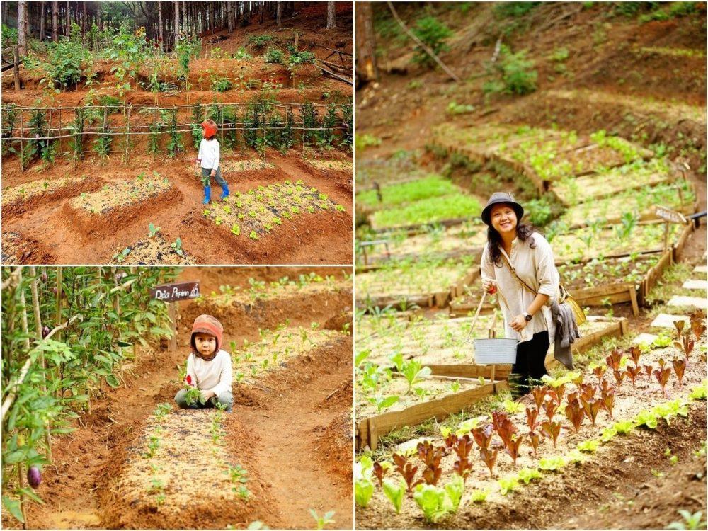 Rừng Thông Mơ Farm & Bistro