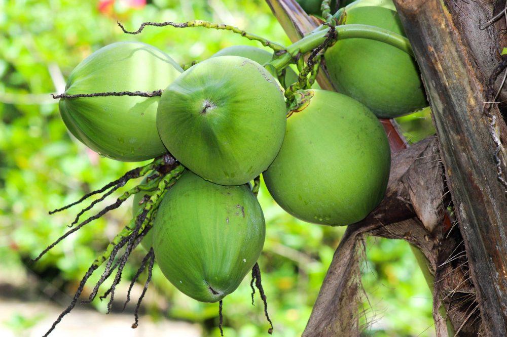 Giá trị dinh dưỡng của nước dừa