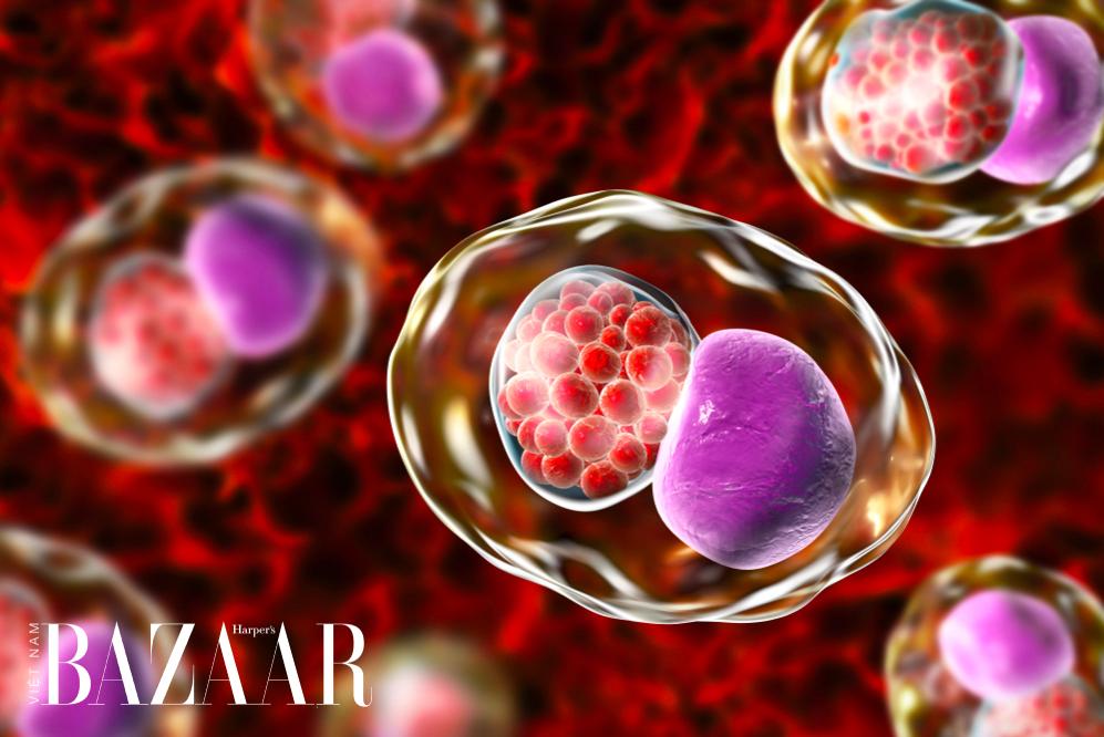 Tinh dịch có thể truyền nhiễm trùng